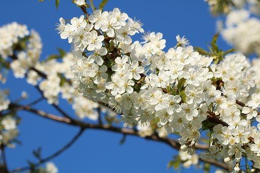 Otevírací doba během květnových svátků